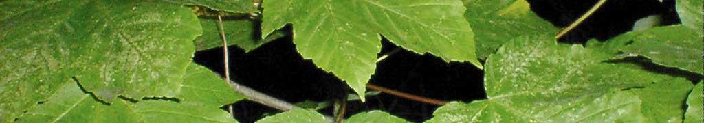 leaves00039a.jpg